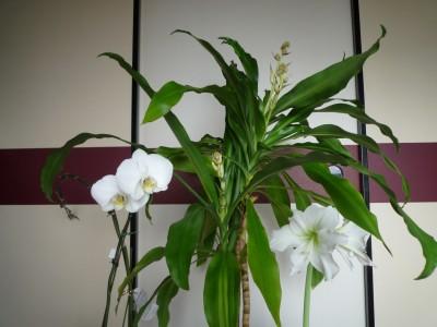 2010.3.17白の競演.JPG